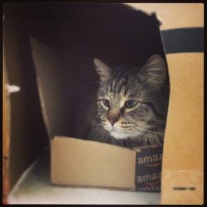 Roscoe says: introspective hibernation...meow meow.